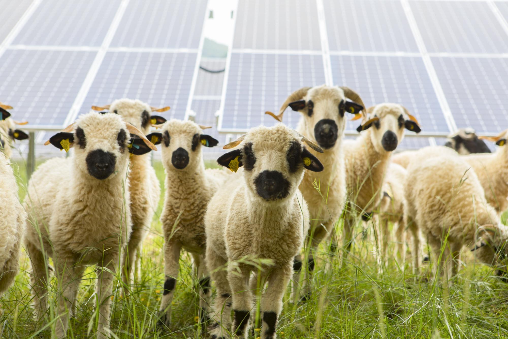 parc photovoltaïque de Villebois