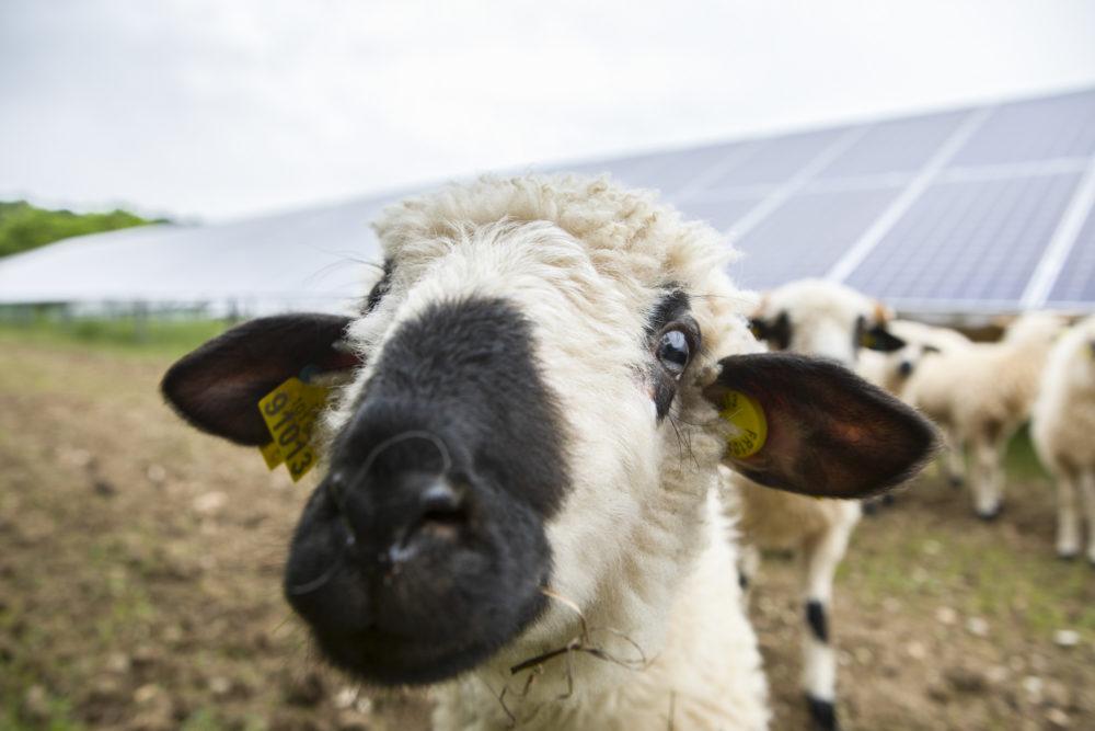 énergie photovoltaïque CNR